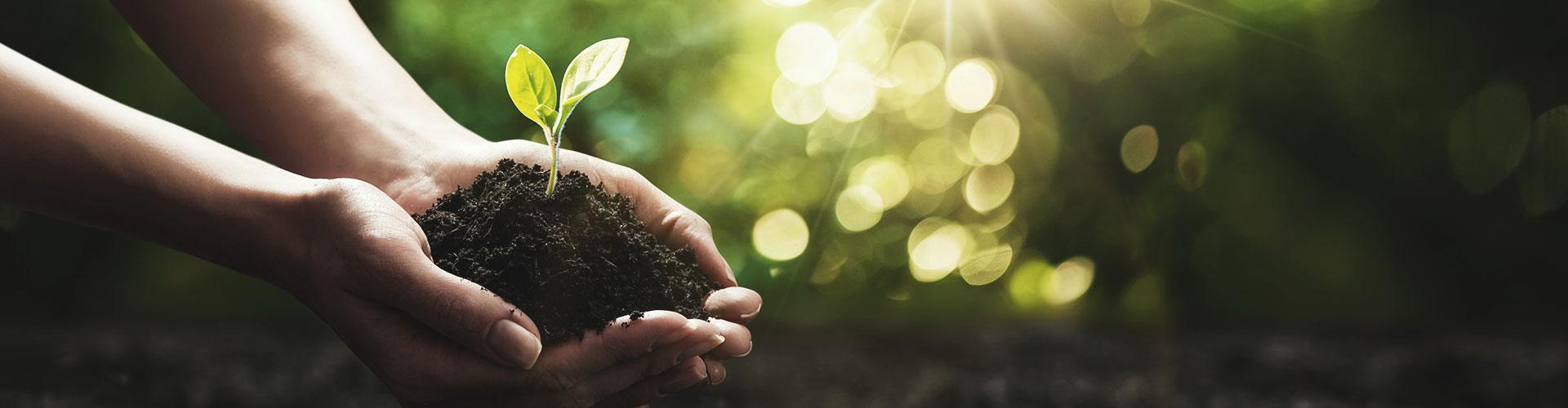 Hände halten eine kleine Pflanze und Erde