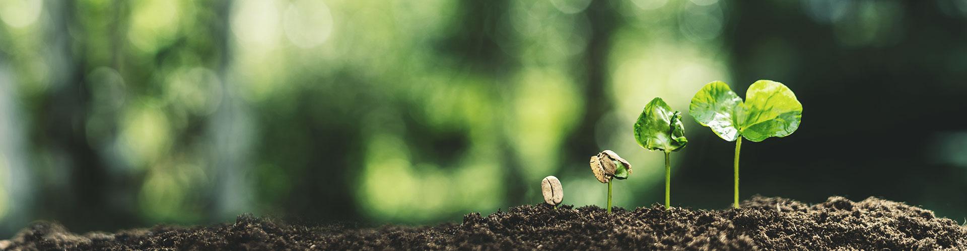 Eine kleine Pflanze wächst aus dem Boden