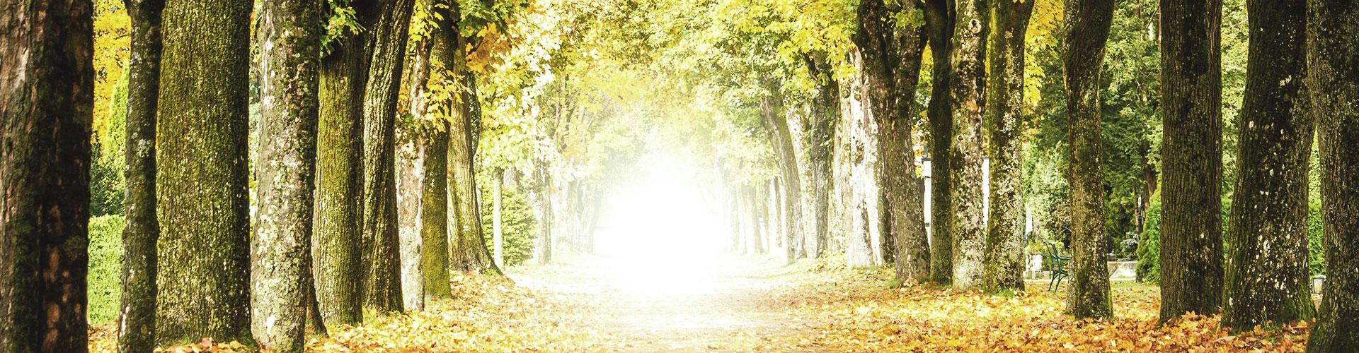 Eine Allee im Wald und tiefstehende Sonne