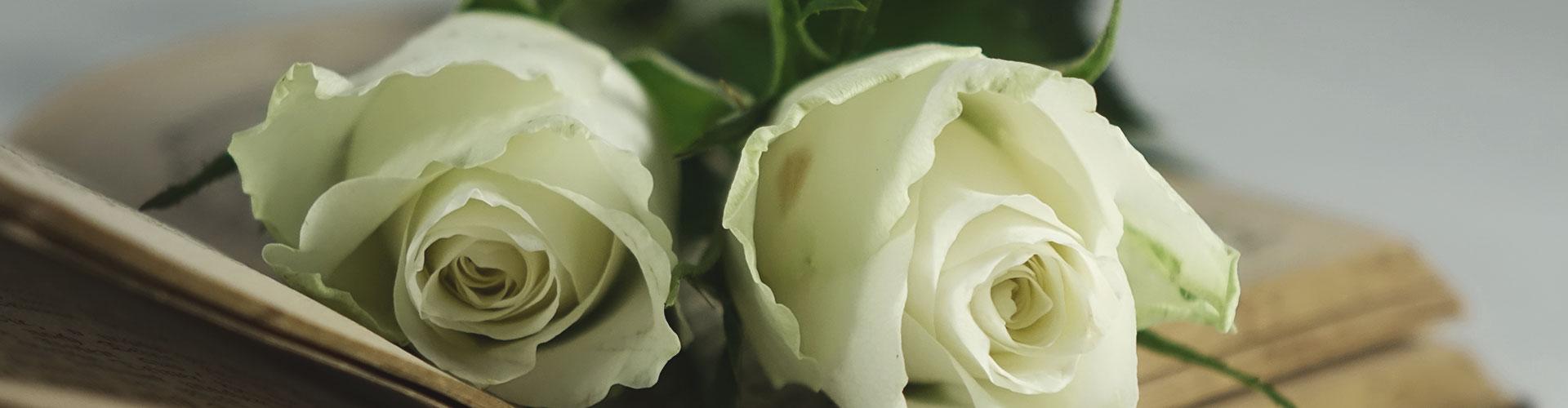 Weiße Rosen auf einem Sarg