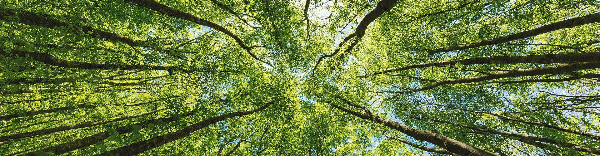Ein Laubwald, aufgenommen aus der Froschperspektive
