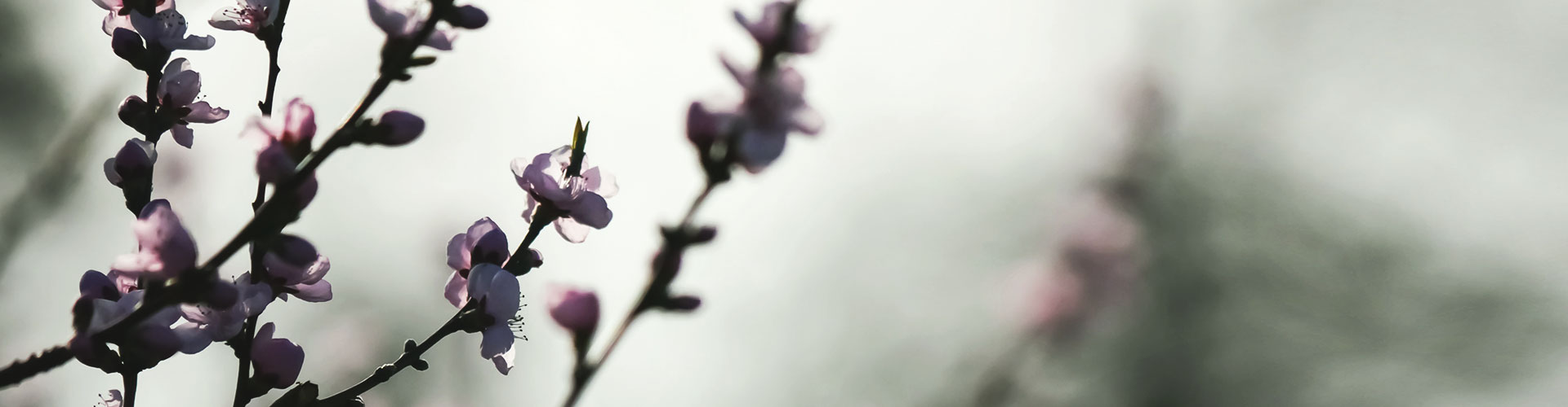Nahaufnahme einer Pflanze vor einem grauen Himmel