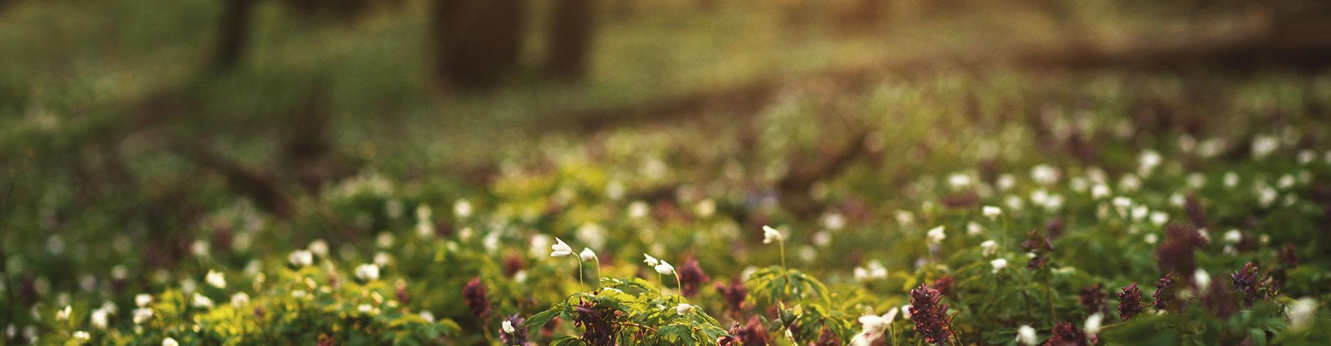 Nahaufnahme vieler Blumen auf einer Wiese