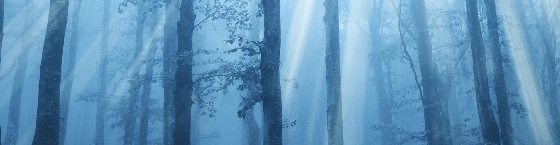 Ein Wald, aufgenommen in der blauen Stunde