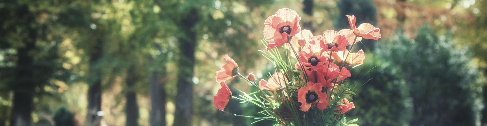 Schmuck-Blumen, im Hintergrund ein Wald