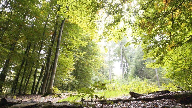 Fotografischer Eindruck aus dem Rheinhöhen-Ruhewald Braubach Dachsenhausen