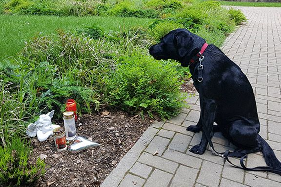 Mensch-Tier-Grab mit Blumen und einem Grabstein