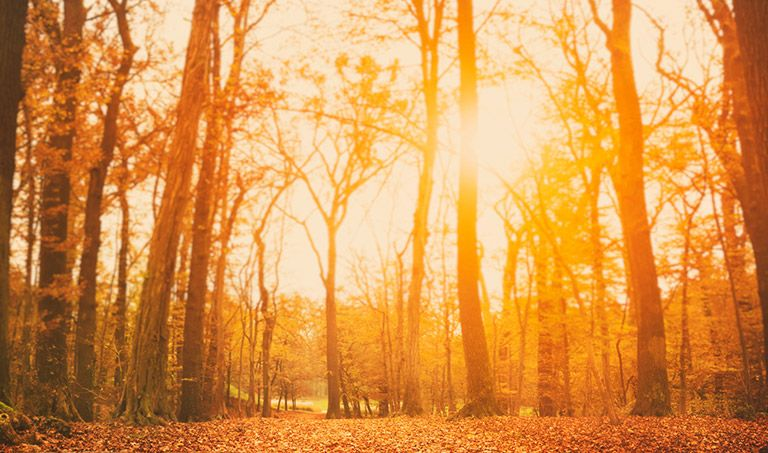 Warmes Licht fällt in einen herbstlichen Wald