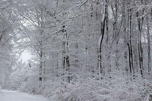 Ansicht eines verschneiten Bestattungswaldes