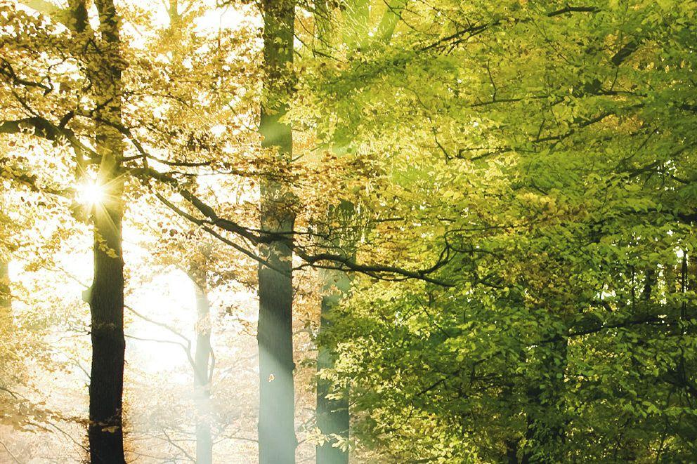Sonne scheint durch einen Wald