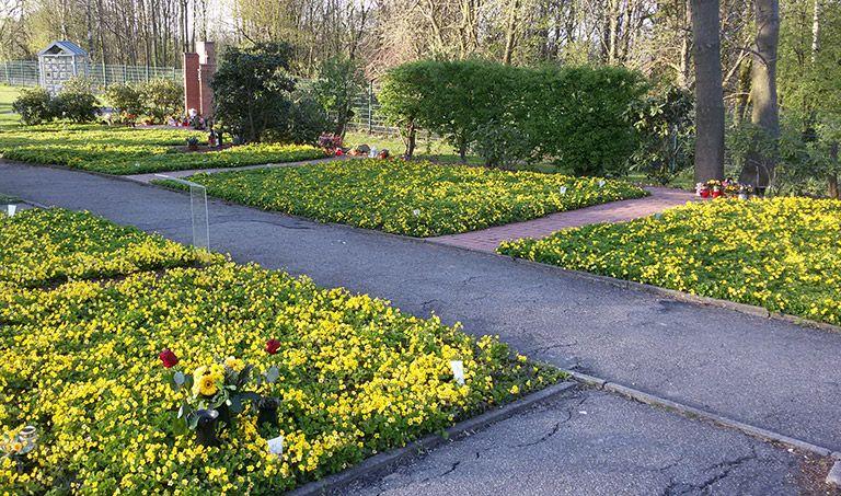 Ein mit Blumen bepflanztes Grab auf einem Friedhof