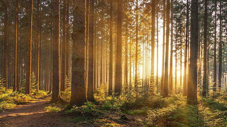Der Begräbniswald Eitorf bei tief stehender Sonne