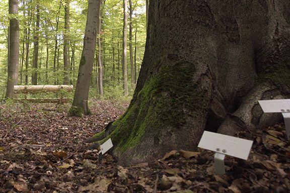 Namensschilder von Verstorbenen im Bestattungswald