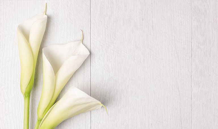 Drei weiße Calla auf einem hellen Holztisch.