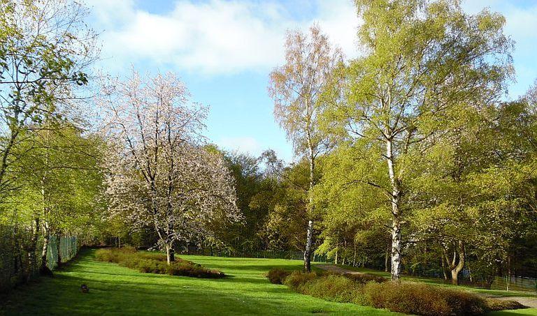 Rasenfriedhof in Dachsenhausen mit mehreren Bäumen bei blauem Himmel und weißen Wolken